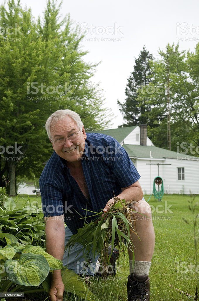 Senior Man Weeding royalty-free stock photo