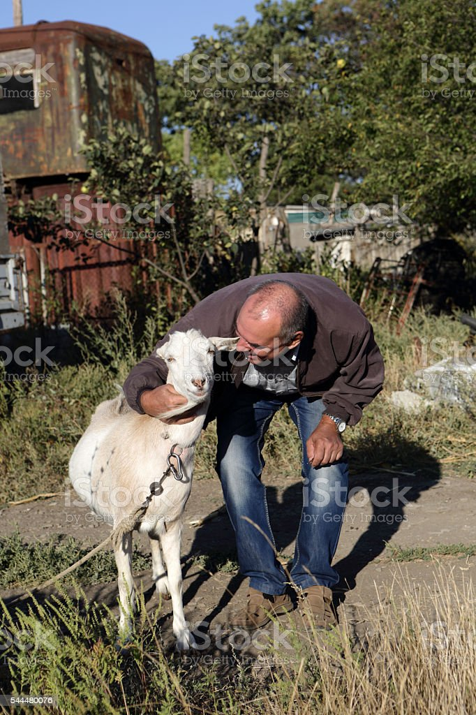 Senior man with a goat stock photo