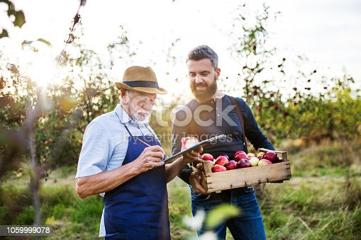 istock A senior man with adult son picking apples in orchard in autumn. 1059999078
