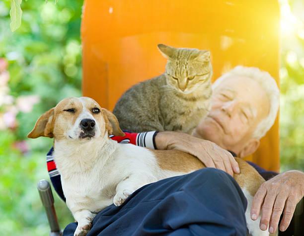 Senior man with dog and cat picture id492387632?b=1&k=6&m=492387632&s=612x612&w=0&h=bur fnja2csfehncvyn2gkhfkzmh6ywhu 4mu0rwegm=