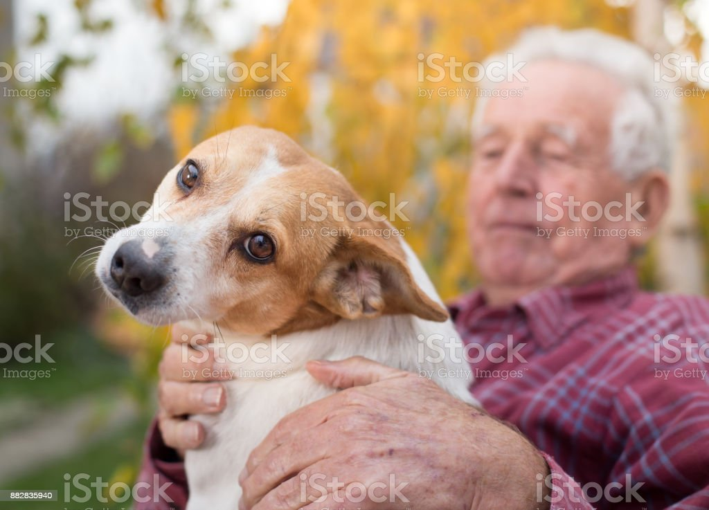 Senior man with dog on bench in park stock photo