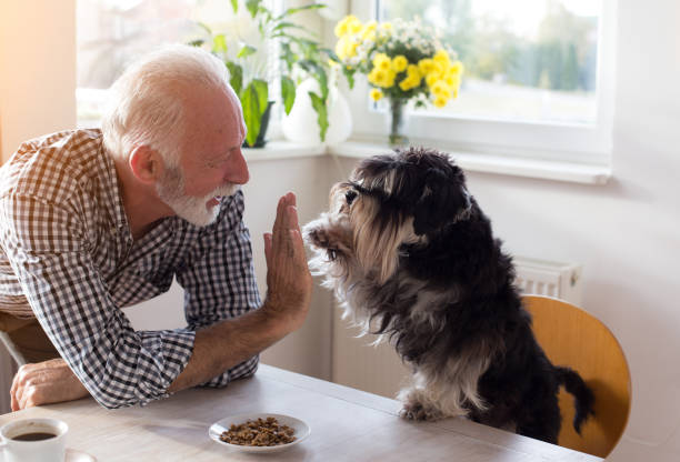 Senior man with dog Cute dog giving five with paw to a senior man at dining table with food in small plate in front of him one senior man only stock pictures, royalty-free photos & images