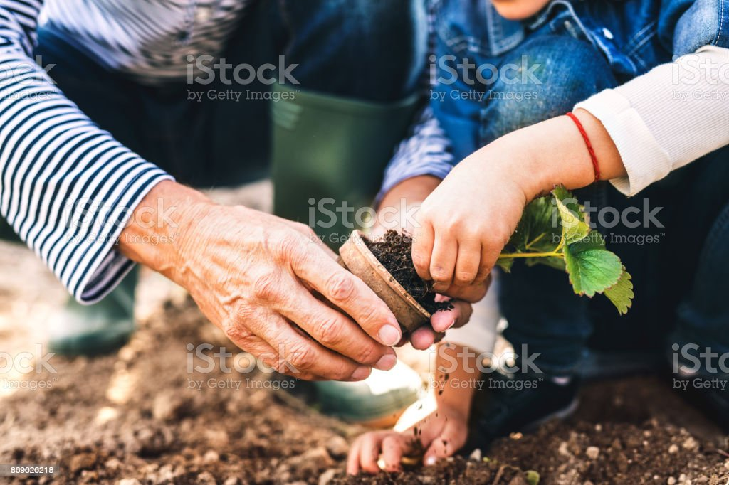Senior man with grandaughter gardening in the backyard garden. stock photo