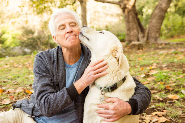Senior man with his dog in park Senior man with his dog in park on an autumns day licking stock pictures, royalty-free photos & images