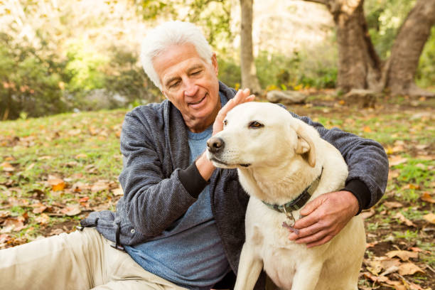Senior man with his dog in park Senior man with his dog in park on an autumns day 65 69 years stock pictures, royalty-free photos & images