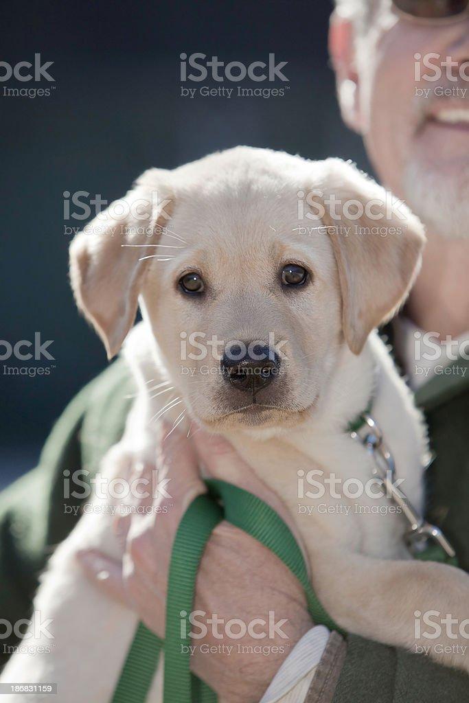 Senior Man with New Puppy royalty-free stock photo