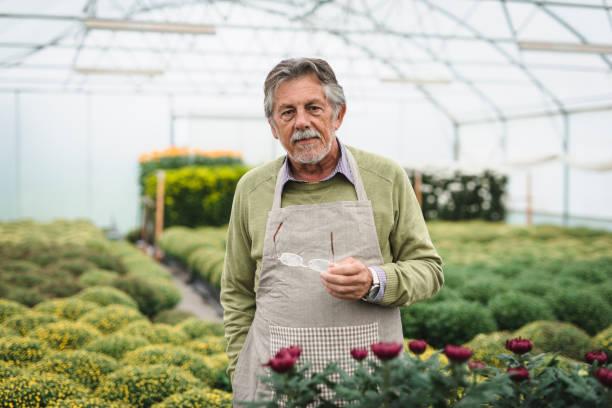 uomo anziano che lavora in una serra e guarda la telecamera - ambientalista foto e immagini stock