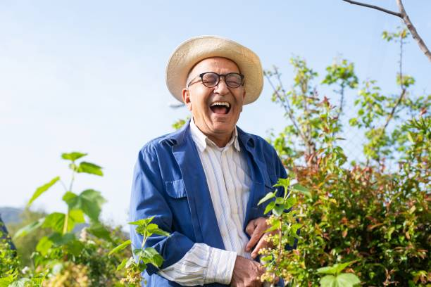 Senior man working in his garden on a sunny day stock photo
