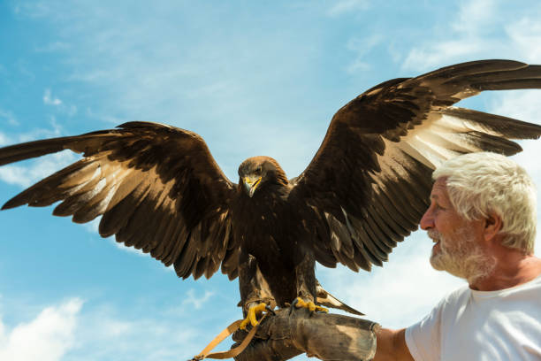 Senior men holding large eagle on his hand stock photo