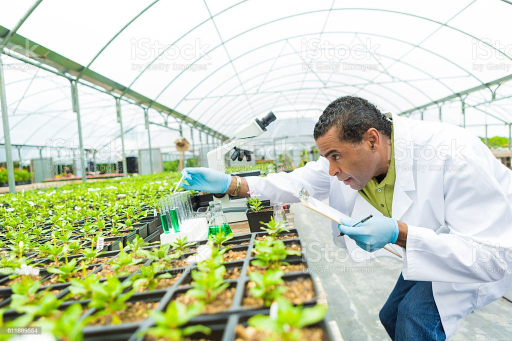 Senior scientst studies plant life in greenhouse stock photo