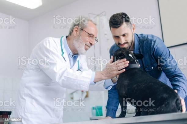 Senior veterinarian examining a dog picture id1152185994?b=1&k=6&m=1152185994&s=612x612&h=mocsfngomicwjdf1al0hwmpziu5e6phrfjiree9alww=