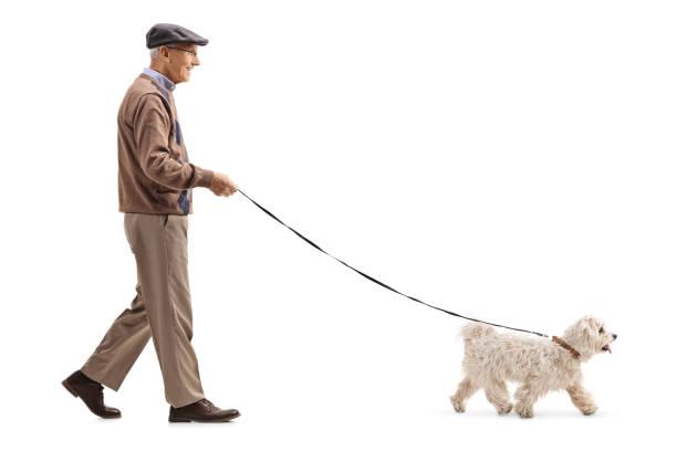 Senior walking a dog picture id1097964364?b=1&k=6&m=1097964364&s=612x612&w=0&h=a10pyydmu0mvaeywxaqa9mztf8 yfenbhwsejfhw 1w=