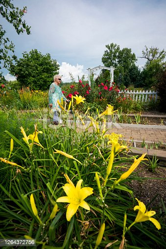 Senior woman  admires colorful blooming flowers in a garden, Evansville, Indiana, USA