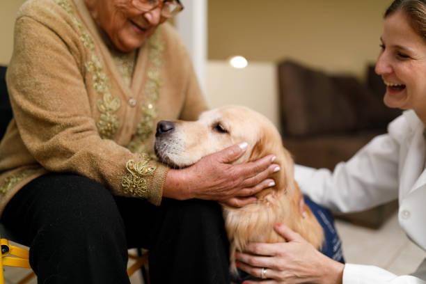 senior woman and caregiver with therapy dog at home - terapia alternativa foto e immagini stock