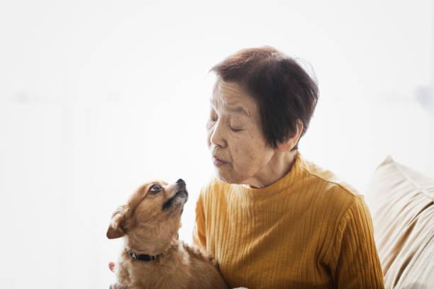 Mulher sênior e um cão em casa - foto de acervo