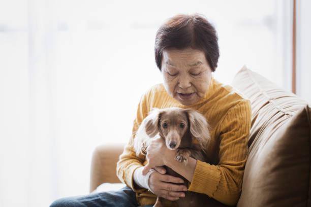 Senior woman and dog at home picture id986566636?b=1&k=6&m=986566636&s=612x612&w=0&h=dluv1j70ksvr0uwunxw nmpjmgtag96t9x9kiaa gak=