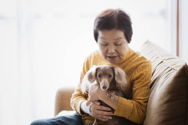 Senior woman and dog at home An asian senior woman and dog relaxed at home. real life stock pictures, royalty-free photos & images
