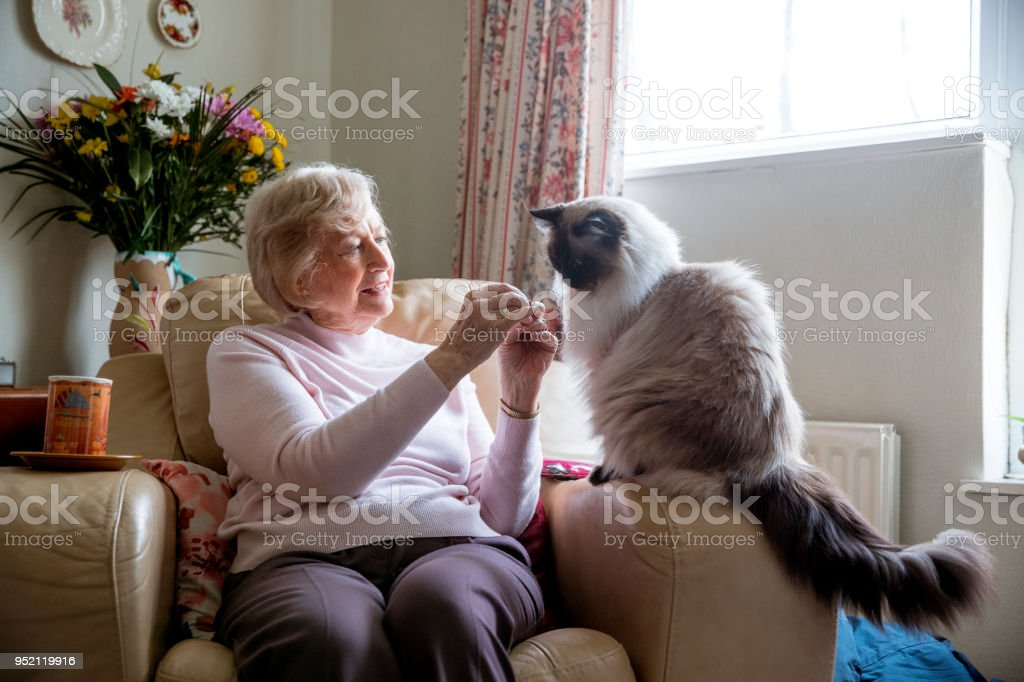 Senior Woman and her Pet Cat stock photo
