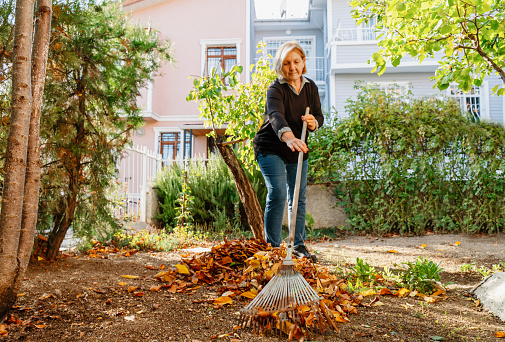 senior woman cleaning the backyard from fallen leaves