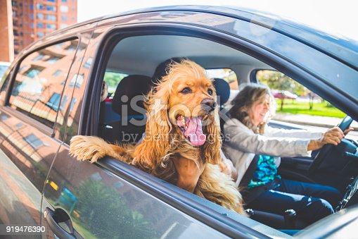 Senior woman driving by car with a dog