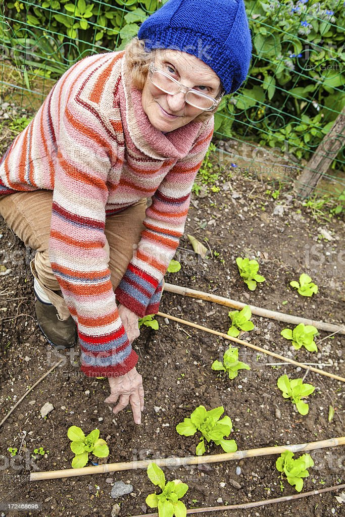 Senior Woman Gardening and Checking Lettuce Plants royalty-free stock photo