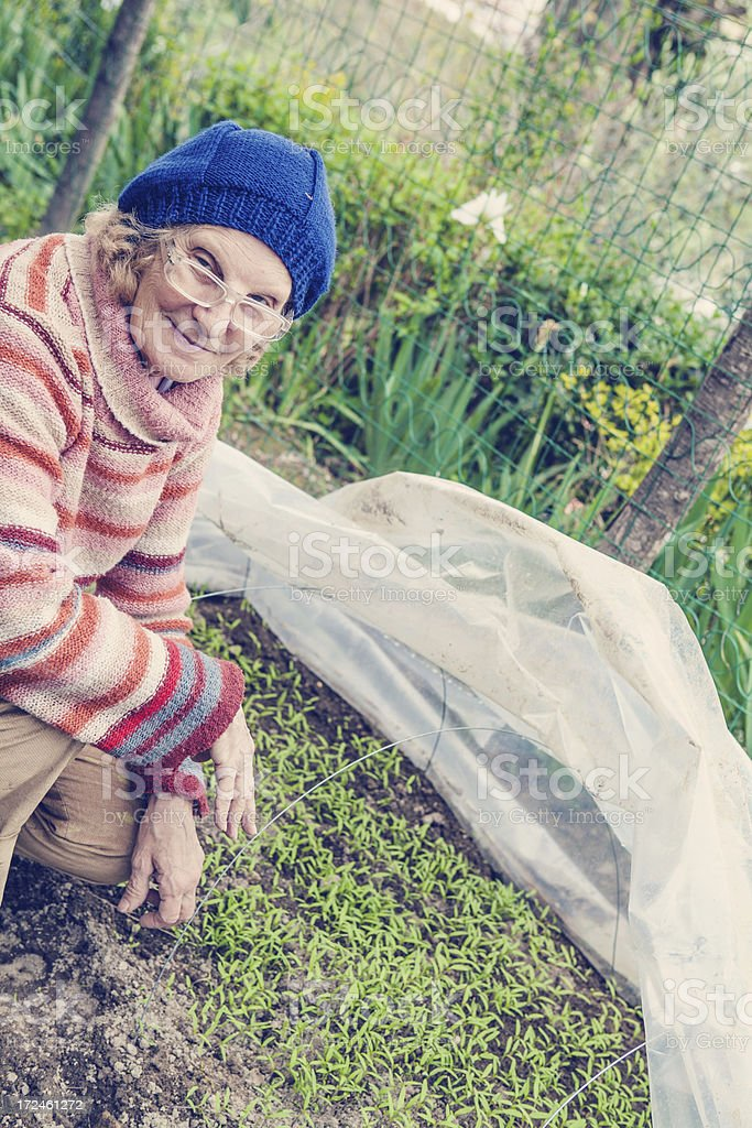 Senior Woman Gardening and Checking Tomato Plants royalty-free stock photo