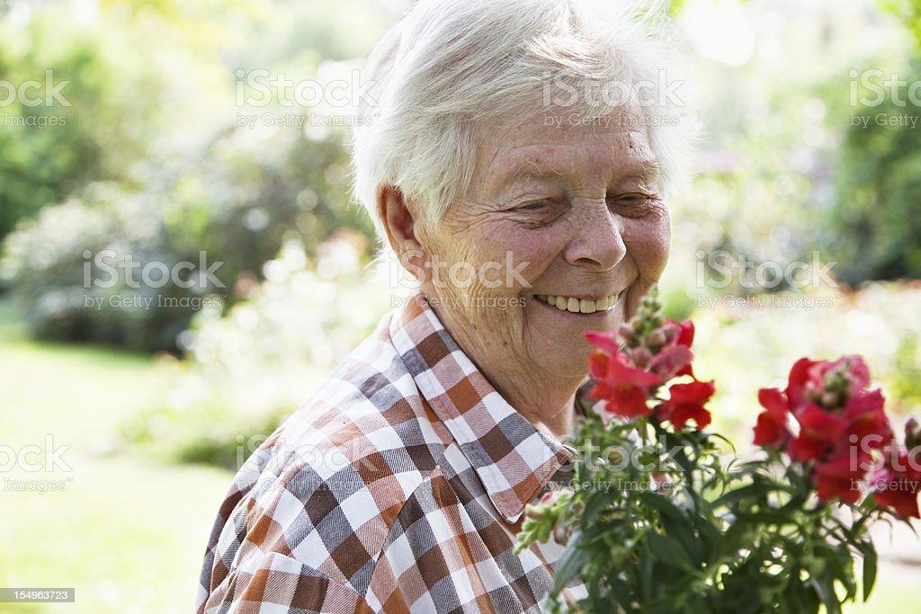 senior woman gardening royalty-free stock photo