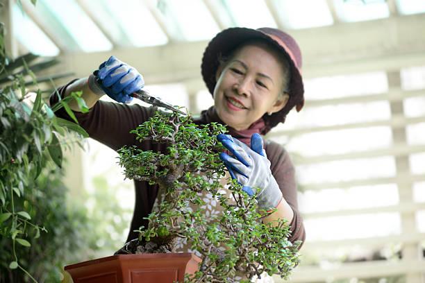 Femme Senior jardinage - Photo