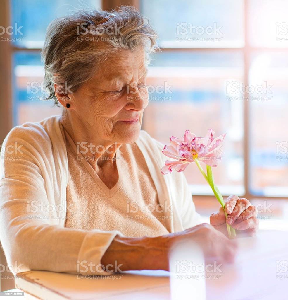 A senior woman gazing down at a beautiful pink flower stock photo