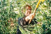 Senior woman harvesting olives