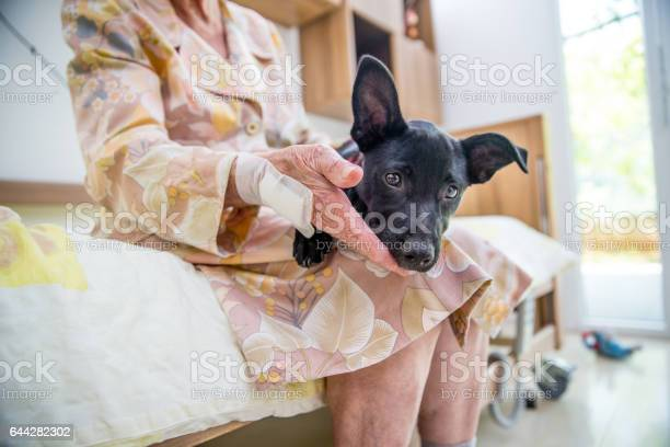 Senior woman having pet therapy in the nursing home picture id644282302?b=1&k=6&m=644282302&s=612x612&h=percrne0uaqppec1 ct23jjg312wnyju5y4q vd 08s=