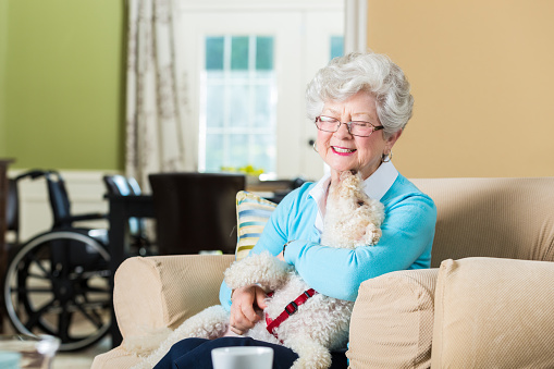 Beautiful smiling senior woman holds a white therapy dog in her home. She is smiling while the dog licks her chin. The dog is in the woman's lap. The woman is sitting on a comfortable chair in her living room. She is wearing a blue sweater and has gray hair and is also wearing glasses. A wheelchair is sitting at the dining room table in the background.