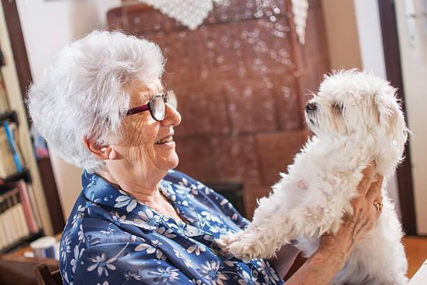 Senior woman holding a cute white maltese dog at home picture id596807194?b=1&k=6&m=596807194&s=612x612&w=0&h=zy 32w5dfnknjeok2xtkqrgr2nwyjat5r16za reedc=