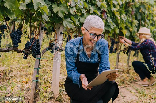 istock Senior woman holding a digital tablet in a vineyard 1063236916