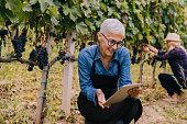 Senior woman looking at a digital tablet in a vineyard