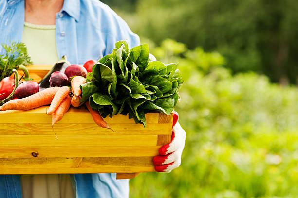 Senior mujer sosteniendo la caja con verduras - foto de stock