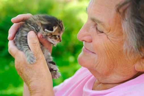 istock Senior woman holding little cat 111973611