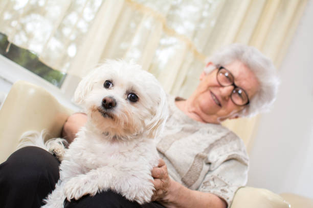 Senior woman holding maltese dog in her lap focus on dog picture id892118478?b=1&k=6&m=892118478&s=612x612&w=0&h=ds752qyt tn5tbslvoomvtu51t  ak3s5cgiaytptp0=