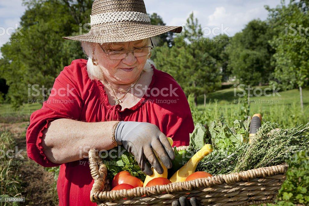 Senior Woman in a Garden Inspecting Produce royalty-free stock photo