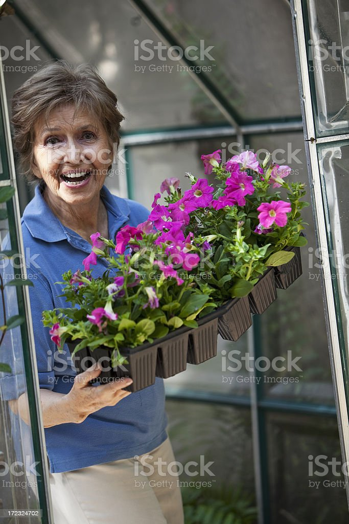 Senior woman in greenhouse stock photo