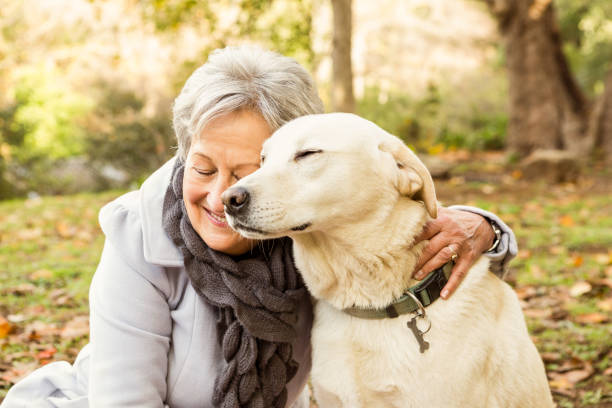 senior woman in the park - happy dogs stock photos and pictures