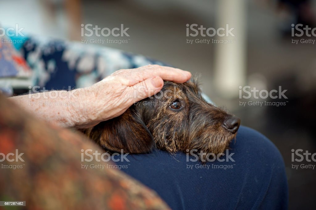 Senior Woman In The Retirement Community Enjoy The Visit Of Her Dog stock photo