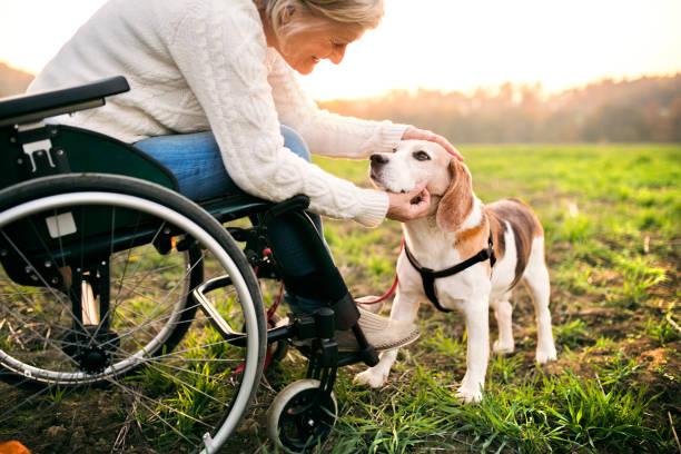 en senior kvinna i rullstol med hund i höstens natur. - single pampas grass bildbanksfoton och bilder