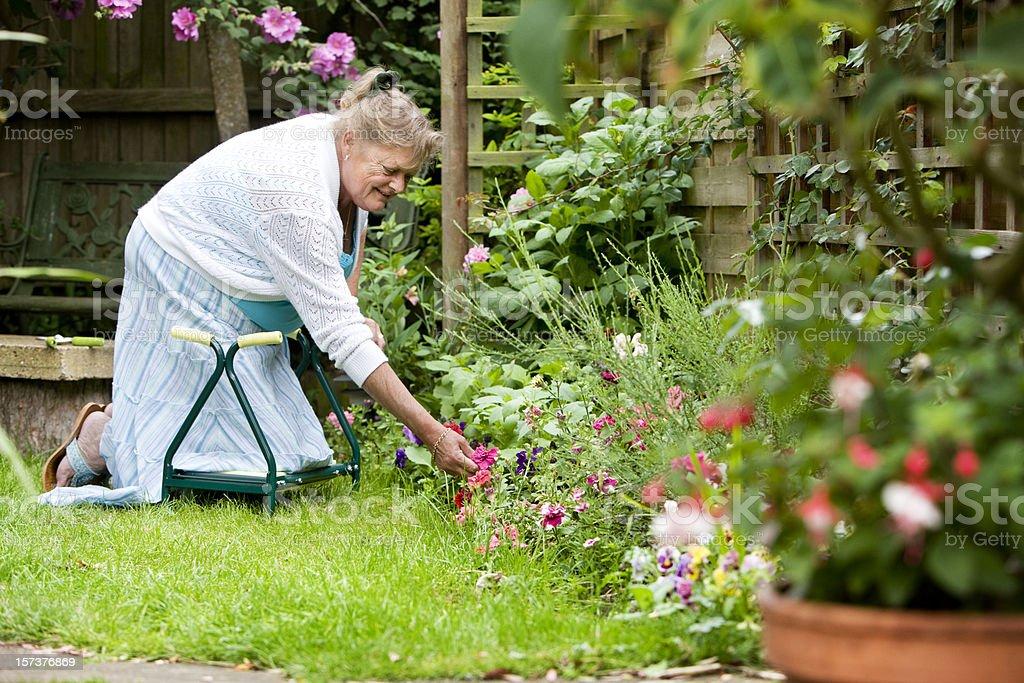 Senior woman kneeling on a kneeler in her garden outdoors. royalty-free stock photo