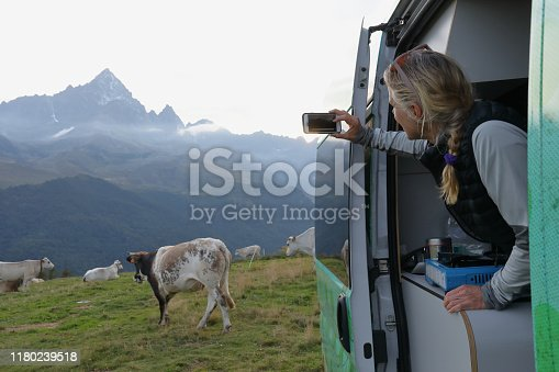 She takes photo with her cell phone of distant cows and scene