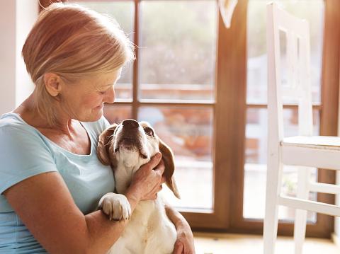 istock Senior woman petting her hound dog 471577584