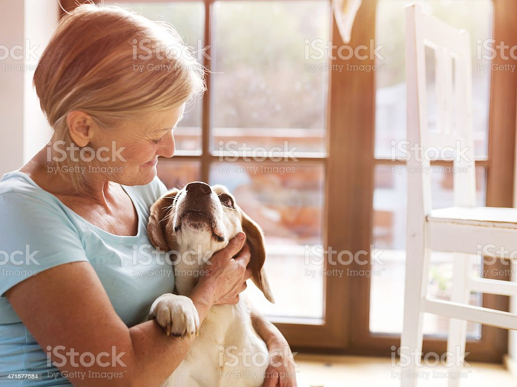 Senior woman petting her hound dog stock photo