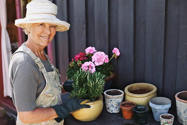 Senior woman planting flowers in a pot Active senior woman potting some plants in terracotta pots on a counter in backyard. Senior female gardener planting flowers in pots potting stock pictures, royalty-free photos & images