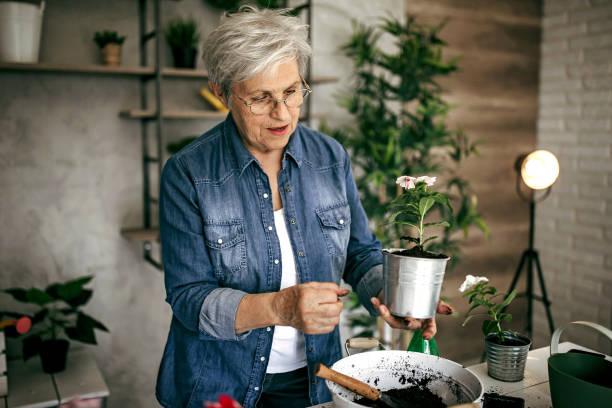 Senior woman planting flowers stock photo