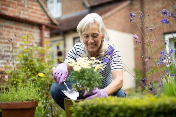 Senior Woman Potting Plant In Garden At Home Senior Woman Potting Plant In Garden At Home gardening stock pictures, royalty-free photos & images